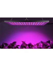 LED kasvivalo vaalealla valolla 12W 24VDC